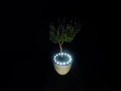 Plant LED verlichting op BATTERIJ WIT
